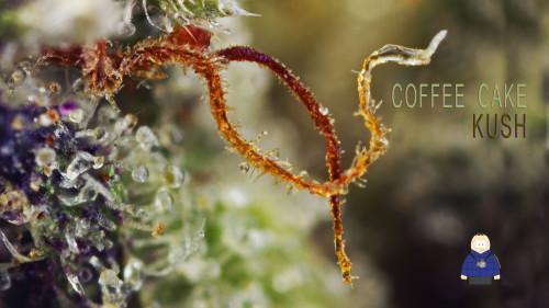 12. Coffee Cake Kush - Honest Springs Wellness
