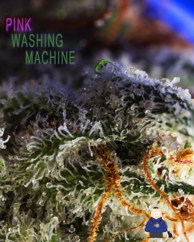 13. Pink Washing Machine - Escarpment Wellness