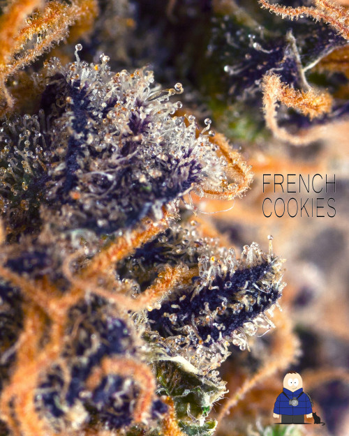 3. French Cookies - Certified Anxiety