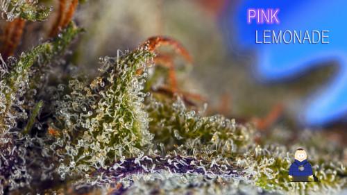 7. Pink Lemonade -Escarpment Wellness